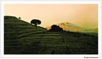 L'Etna innevato... in primo piano Monte Troina... Gennaio, 2005  - Etna (3227 clic)