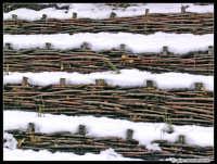 Neve sull'Etna (texture) - Pressi Piano Bottara  - Etna (3719 clic)