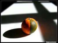 Titolo: OGM? - Arancia di Sicilia (naturale!!!)  - Catania (4546 clic)