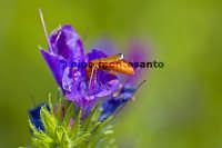 Fauna dell'Etna  - Etna (2214 clic)
