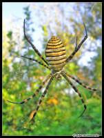 Macro di un ragno...  - Vendicari (3285 clic)