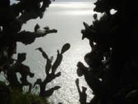 Vista del mare dallo zoo fattoria di terrasini, cn inprimo piano alcune piante di fichi d'india.  - Terrasini (14438 clic)
