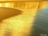 Riflessi dorati   - Palma di montechiaro (3981 clic)
