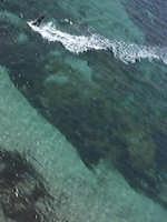 come i gabbiani vedono un kiter  - Marsala (2080 clic)