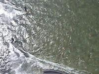 prime foto aeree di kiter allo stagnone  - Stagnone (2414 clic)