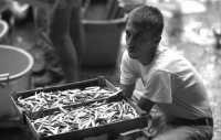 Il venditore di pesce  - Catania (3076 clic)