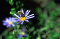 Un insetto  - Iblei (6408 clic)