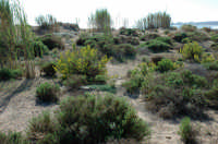 Macchia mediterranea  - Iblei (32309 clic)
