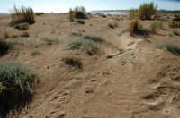 Dune a Pozzallo  - Pozzallo (4261 clic)