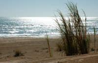 Dune a Pozzallo  - Pozzallo (5684 clic)
