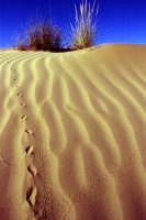 Dune  - Pozzallo (5368 clic)