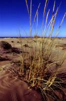 Dune  - Pozzallo (3879 clic)
