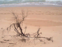 La spiaggia di Bruca  - Scicli (4033 clic)