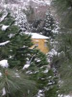 In mezzo al bosco innevato! 15 febbraio 2009 (-1°)  - Borgetto (5342 clic)