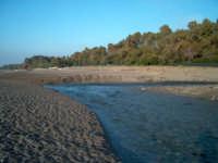 Foce del Fiumefreddo area protetta  - Marina di cottone (2280 clic)