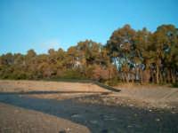Foce del Fiumefreddo riserva integrale  - Marina di cottone (1957 clic)