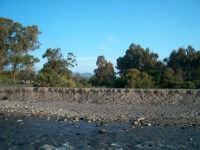 Foce del Fiumefreddo riserva integrale  - Marina di cottone (2003 clic)