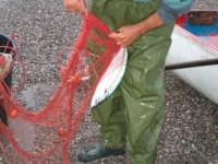 Piccola pesca detta trimaglio Fiumefreddo di Sicilia  - Marina di cottone (2438 clic)