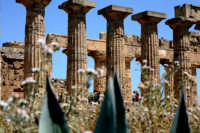 tempio greco  - Agrigento (2412 clic)