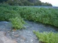 Fiumefreddo di Sicilia riserva naturale  - Marina di cottone (2519 clic)