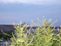 Fiumefreddo di Sicilia riserva naturale  - Etna (1363 clic)