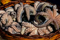 puppipescati con la lenza chiamata ontru cu pisci vivu  - Fiumefreddo di sicilia (4047 clic)