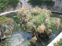 IL PAPIRO.. fontana Aretusea  - Siracusa (4575 clic)