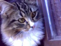 primo piano di gatto incuriosito  - Palermo (3619 clic)