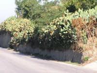 panorama  I MIEI SITI INTRNET:  http://www.facebook.com/profile.php?id=1436166951&src=fftb  http://www.facebook.com/profile.php?id=1436166951&src=fftb#/group.php?gid=42074092367&ref=share  http://www.foto-sicilia.it/fotografo.cfm?IDFotografo=1659  http://www.fotografieitalia.it/fotografo.cfm?ID=1356   - Corleone (3748 clic)