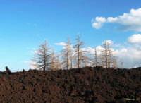 Lava 2003 a piano provenzana  - Linguaglossa (2093 clic)