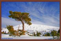 Etna Ovest da strada altomontana galvarina-monte palestro  - Bronte (2433 clic)