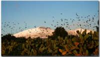 tramonto  - Biancavilla (1550 clic)