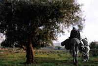 'co sciccareddu  - Biancavilla (2150 clic)