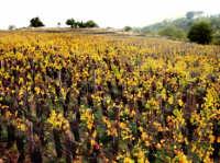 panorama agricolo  - Biancavilla (5331 clic)