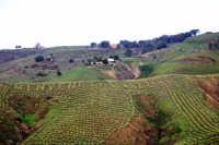 panorama agricolo  - Vizzini (6447 clic)