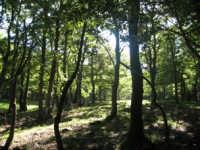 foresta di cerri  - Nicosia (5312 clic)
