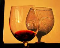 Giornata Vino e Giovani Facoltà di Agraria Marzo 2009  - Catania (5657 clic)