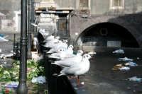 I Gabbiani alla Pescheria  - Catania (3210 clic)