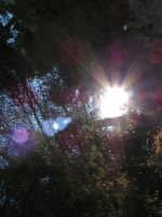 Spiragli di luce all'interno del parco del castello  - Caltabellotta (1486 clic)