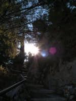 Spiragli di luce all'interno del parco del castello  - Caltabellotta (1408 clic)