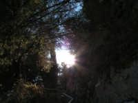 Spiragli di luce all'interno del parco del castello  - Caltabellotta (1366 clic)
