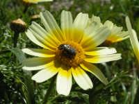 Il gusto dei fiori  - Caltabellotta (1789 clic)