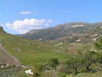 Paesaggio primaverile caltabellottese.  - Caltabellotta (1360 clic)