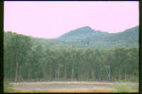 bosco alle falde dell'etna  - Etna (3525 clic)