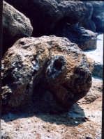 Coniglio sulla spiaggia Le Sculture di Gerry  - San giorgio di sciacca (1821 clic)