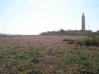 prato fiorito   - Torretta granitola (3110 clic)
