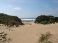 tra le dune  - Torretta granitola (4646 clic)