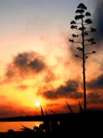 tramonto marino  - Sampieri (1466 clic)