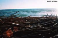 Canneto alla foce dell'Irminio  - Marina di ragusa (3090 clic)