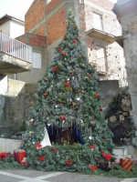 Natale 2006 Albero di 6m realizzato dai ragazzi di Alì  - Alì (3275 clic)